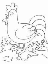 Coloring Rooster Chicken Galo Desenho Colorir Cock Tecido Pintura Desenhos Hahn Cartoon Embroidery Galos Drawing Dick Colouring Ggpht Lh3 Patterns sketch template
