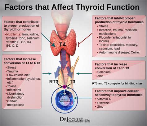 natural remedies  thyroid health drjockerscom