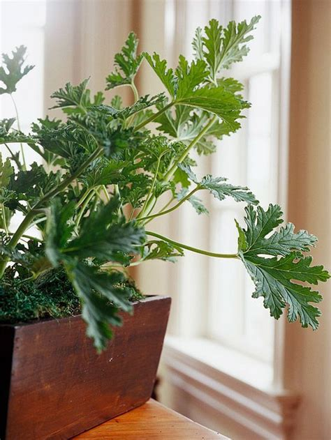 43 Best Images About House Plants On Pinterest The