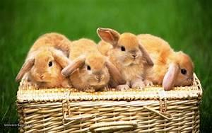 30 Adorable Ani... Cute Animals