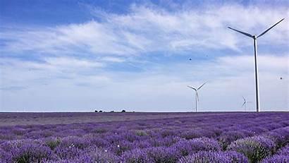 Lavender Field Animated June Galmeanu Alex Property