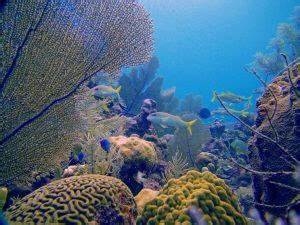 Cayman Eco - Beyond Cayman William hails young people as ...