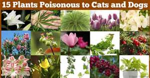plants poisonous to cats 15 poisonous plants your pets should avoid