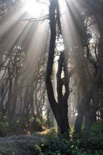 Beautiful Forest with Light