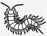 Centipede Coloring Millipede Outline Pngkey Transparent Background sketch template