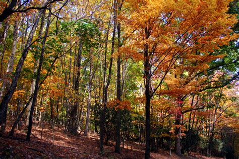 trees with fall foliage colorful fall trees on hiking trail forest foliage autumn fall nature pictures