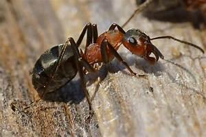 Ameisen Im Winter : ber den weiselberg eine ameise beim sonnenbad 2016 02 25 11 24 19 ~ A.2002-acura-tl-radio.info Haus und Dekorationen
