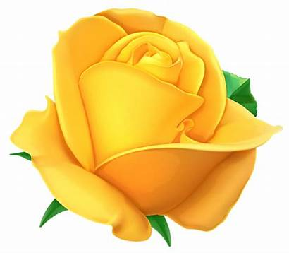 Yellow Rose Clipart Transparent Roses Flowers Clip