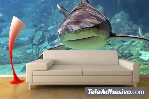 chambre moto el tiburon