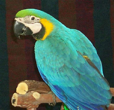 My favourite pet parrot essay