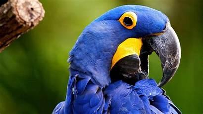 Bird Wallpapers Parrot Birds Butterfly Macaw Butterflies