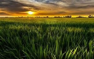 Wallpaper, Green, Sun, Fields, Green, Sky, Clouds, Dusk
