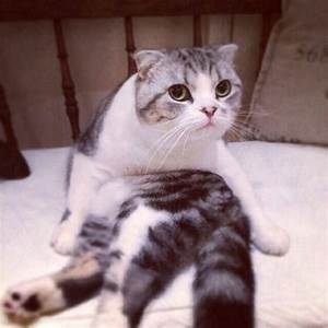 1000+ images about Meredith on Pinterest | Cats, Pictures ...