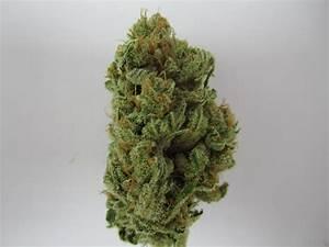 Lemon Skunk   Marijuana Strains   CannaCentral