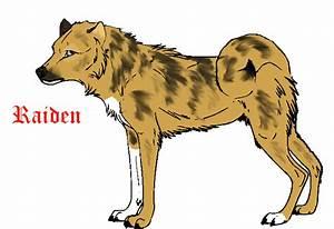 Afghan Tiger Dog- Raiden by xWolfPackLeaderx on DeviantArt