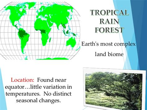 Earth Floor Biomes Tropical Rainforest by Terrestrial Biomes