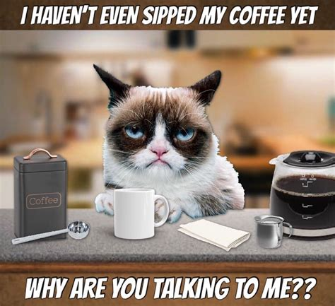 Read coffee captions from the story photo captions by sanyulli (ash) with 179 reads. Grumpy Says No Coffee No Talkie 🤭🤫☕️😹 | Grumpy cat