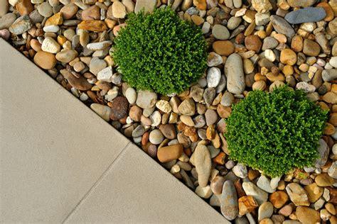 Welche Pflanzen Für Sonnigen Vorgarten by 1001 Ideen Und Bilder Zum Thema Vorgarten Modern Gestalten