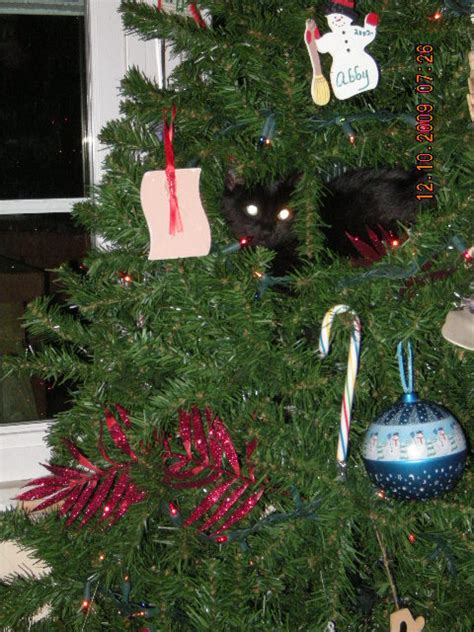 how to keep cats out of the christmas tree finger click