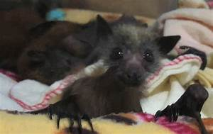 adorable cute animals baby bat spacecadet •