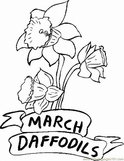 Coloring March Pages Printable Daffodils Flowers Daffodil