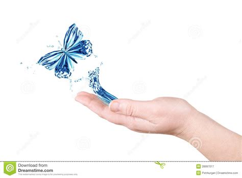 water and butterfly stock image image of animal