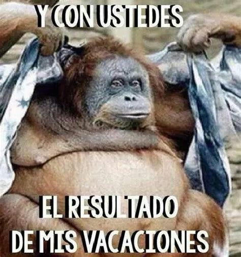 Chistosas Memes - vacaciones chistosas www pixshark com images galleries with a bite