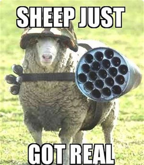 Sheep Memes - funny pictures of the day 90 pics