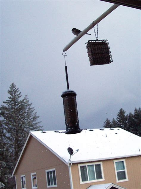 howdy ya dewit the rat resistant bird feeder