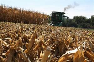 Corn Corps: CORN HARVEST HAS ARRIVED