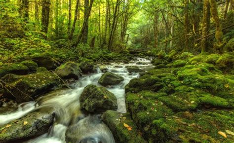 Download Nature Autumn Small River Forest Trees 2k 4k