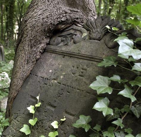 Botanik Wie Bäume sich Gegenstände einverleiben WELT