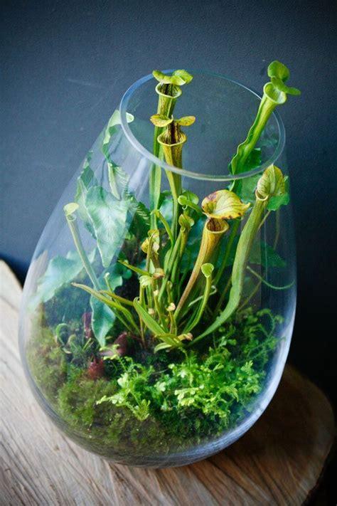 small terrarium plants create a fascinating carnivorous terrarium tropical pitchers pitcher plant and terraria