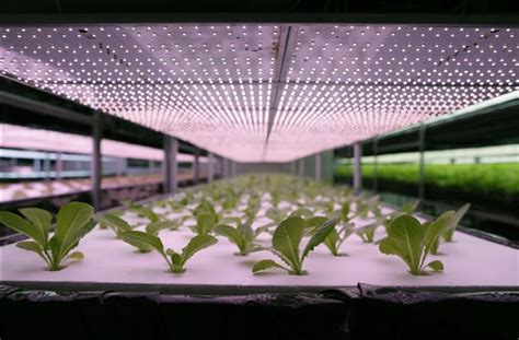 indoor farming led lights taiwan expanding into indoor led lit pesticide free farms