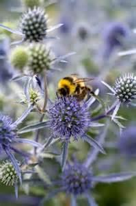 Purple Flowers Bees Love