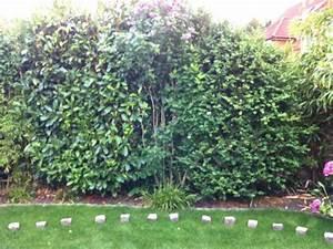 Bambus Im Garten Vernichten : bambus umpflanzen welche art von bambus tipps zum ~ Michelbontemps.com Haus und Dekorationen