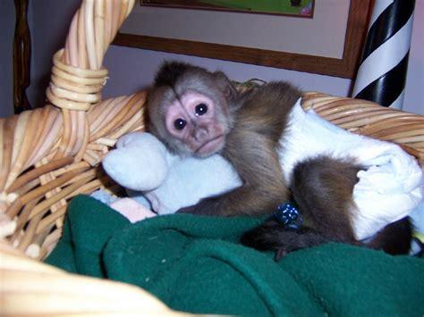 animales salvajes como mascotas reptiles primates