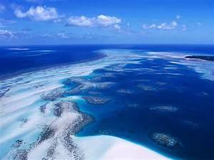 Coral, Reef, Australia, Wallpapers