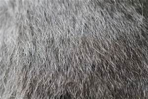 Dog Dandruff Or Flea Eggs