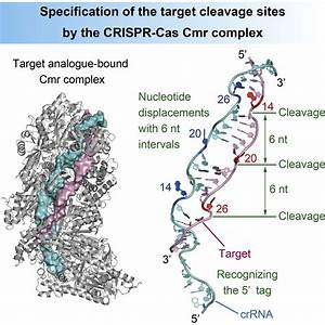 Crystal Structure Of The Crispr