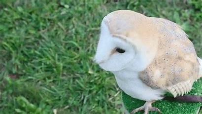 Wildlife Lilian Owl Hello