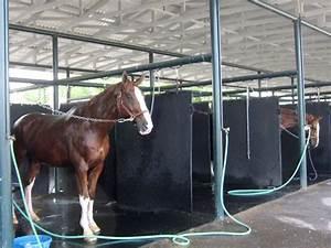 Horse Washing Station