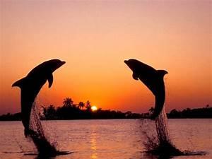 Schöne Delfin Bilder : spa liebende delphine vektorgrafik nature and people pinterest vektorgrafik tierbilder ~ Frokenaadalensverden.com Haus und Dekorationen
