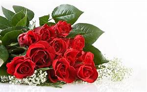 Red Rose Flowers | Beautiful Cool Wallpapers