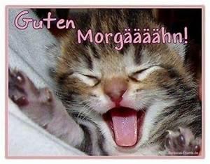Freche Gute Nacht Bilder : guten morgen katzen cats good morning und good night ~ Yasmunasinghe.com Haus und Dekorationen