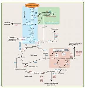 Metabolic Pathways Summary