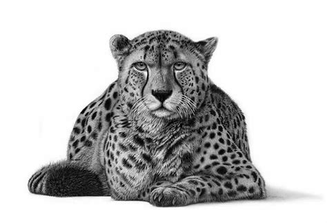 realistic animal drawings hyper realistic animal drawing