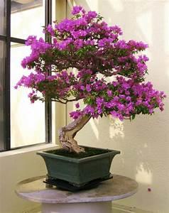 Baum Fällen Kosten Forum : 20 der sch nsten bonsai b ume als inspiration im fr hling ~ Jslefanu.com Haus und Dekorationen