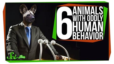 6 Animals With Oddly Human Behavior Youtube