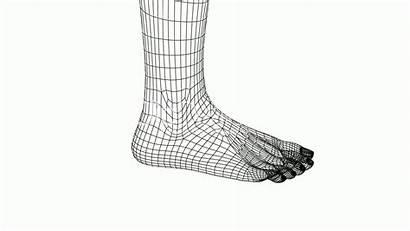 Foot Leg 3d Rotation Barefoot Sketch Female
